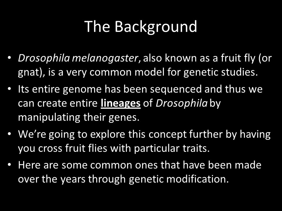 The Background Drosophila melanogaster, also known as a fruit fly (or gnat), is a very common model for genetic studies.