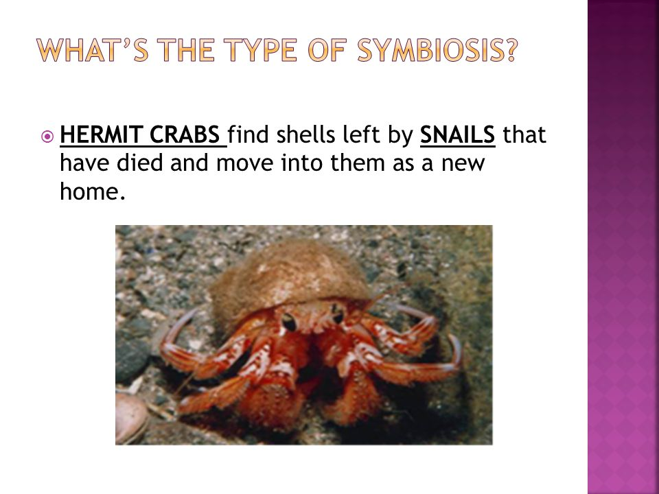 WHAT'S THE TYPE OF SYMBIOSIS