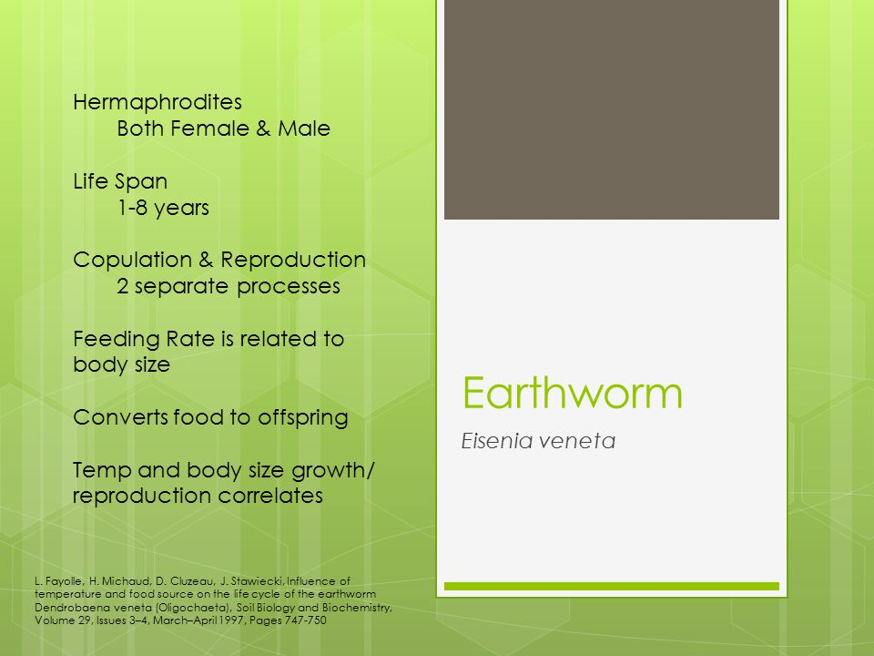 Earthworm Hermaphrodites Both Female & Male Life Span 1-8 years
