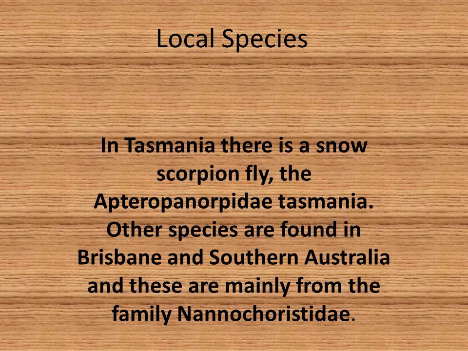 Local Species