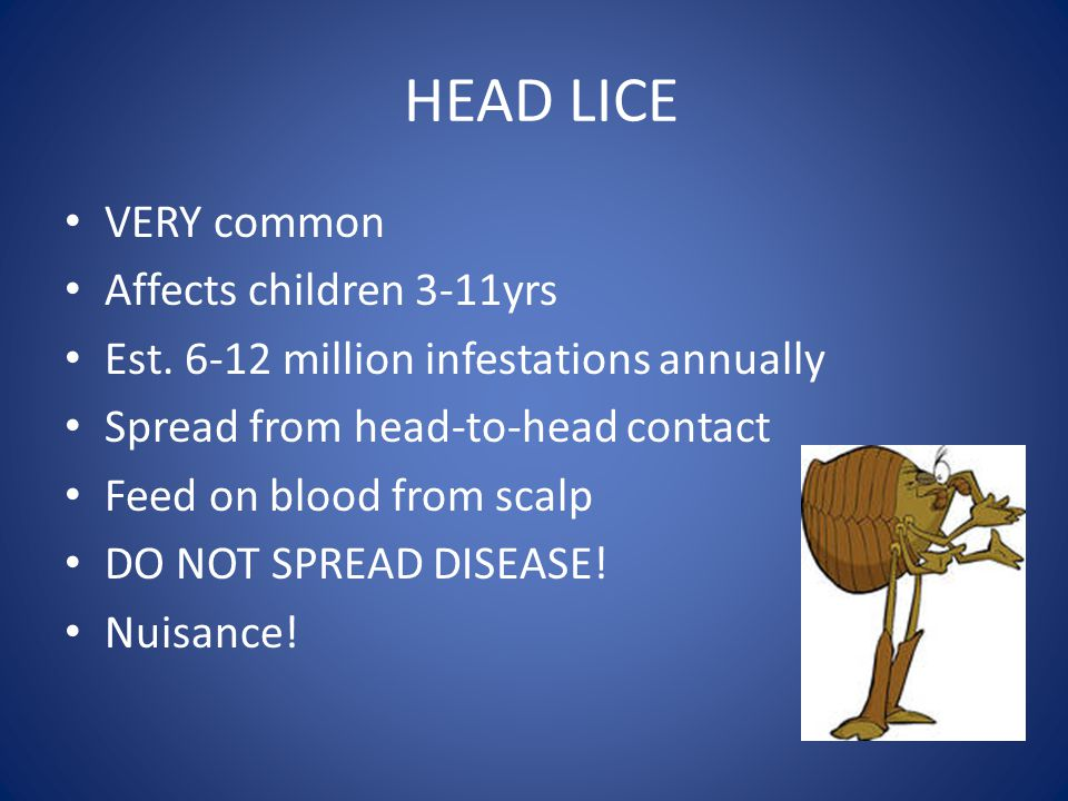 HEAD LICE VERY common Affects children 3-11yrs