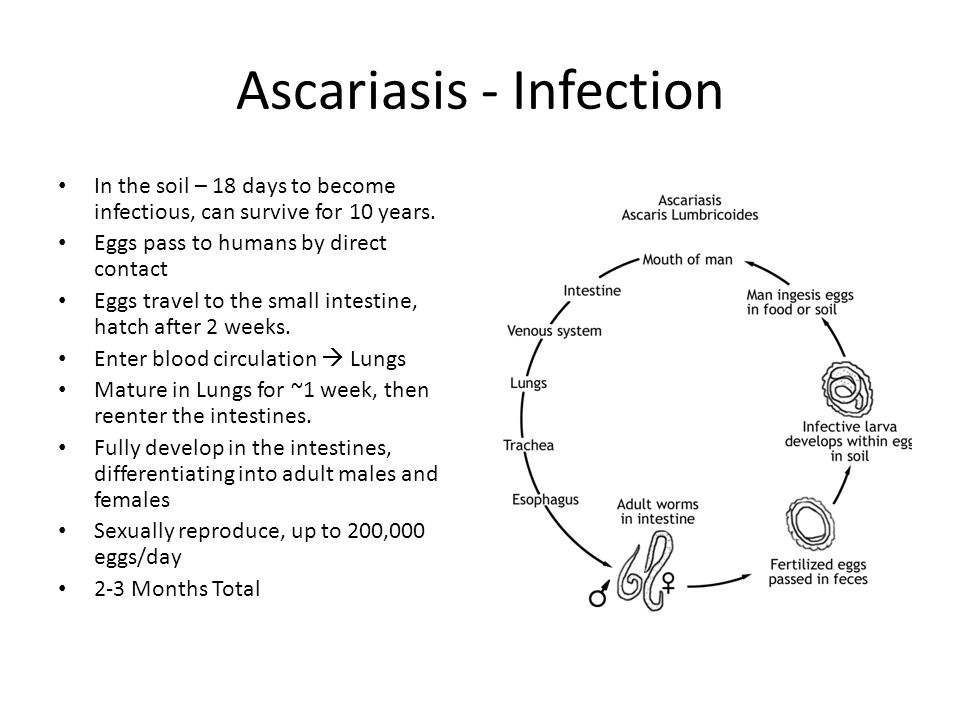 Ascariasis - Infection