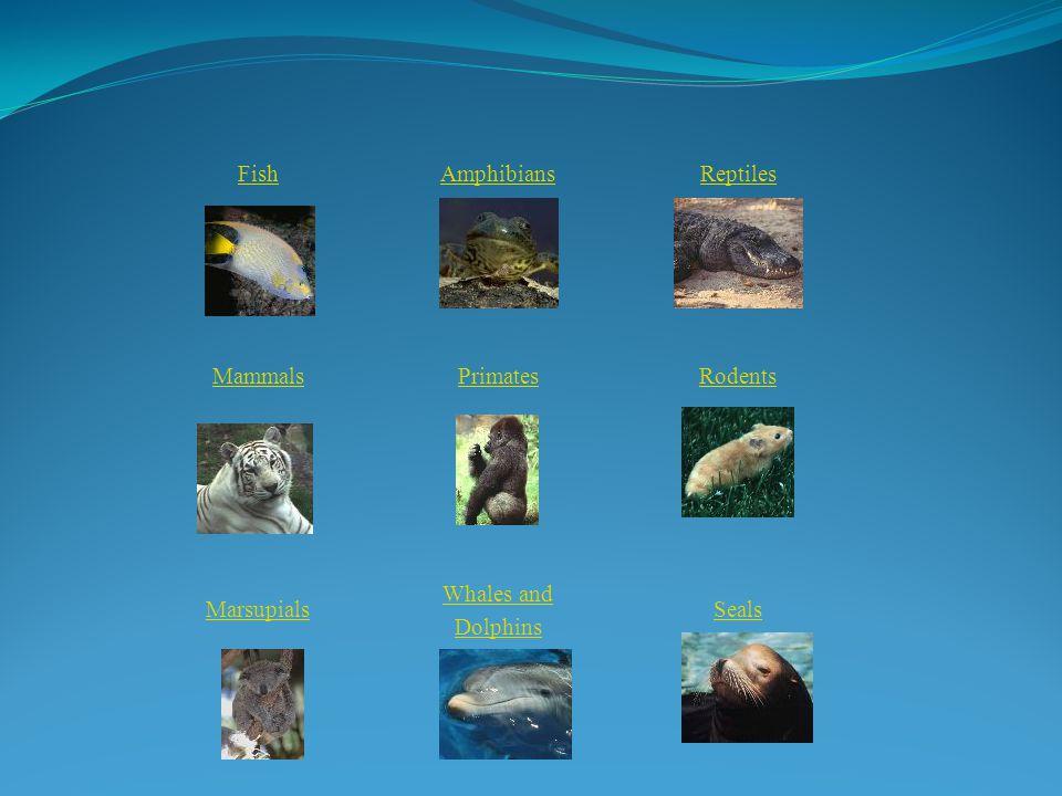 Fish Amphibians Reptiles Mammals Primates Rodents Marsupials Whales and Dolphins Seals