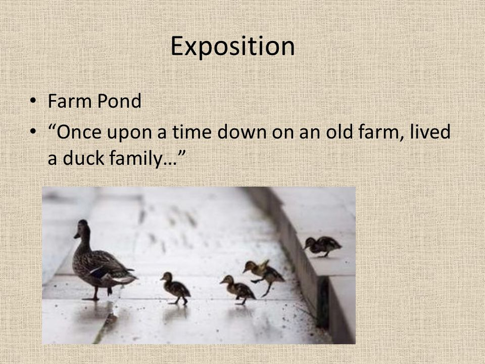 Exposition Farm Pond Once upon a time down on an old farm, lived a duck family…