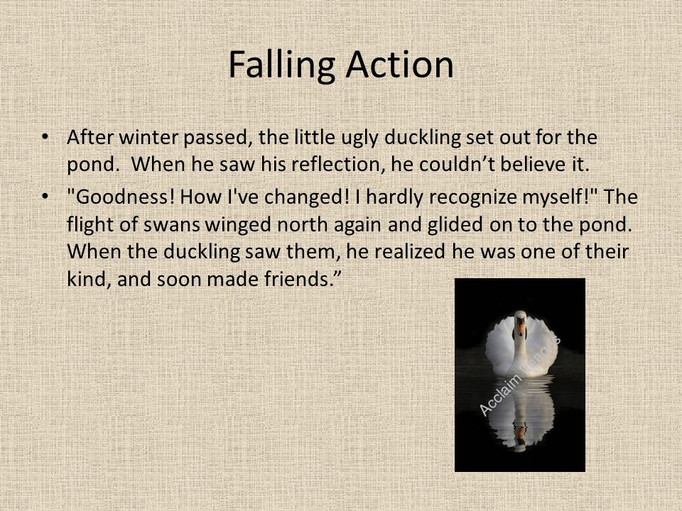 Falling Action After winter passed, the little ugly duckling set out for the pond. When he saw his reflection, he couldn't believe it.