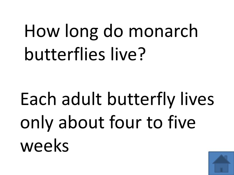 How long do monarch butterflies live Each adult butterfly lives only about four to five weeks