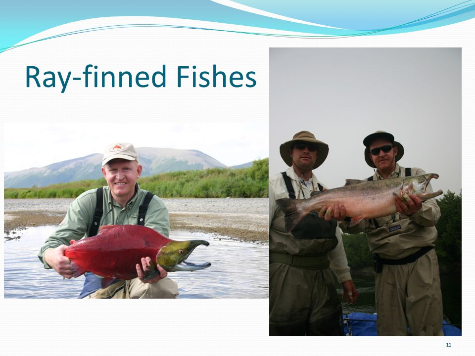 Ray-finned Fishes