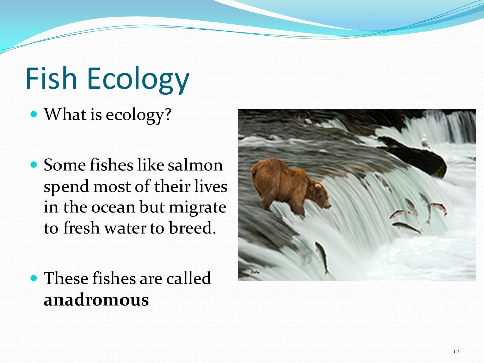 Fish Ecology What is ecology