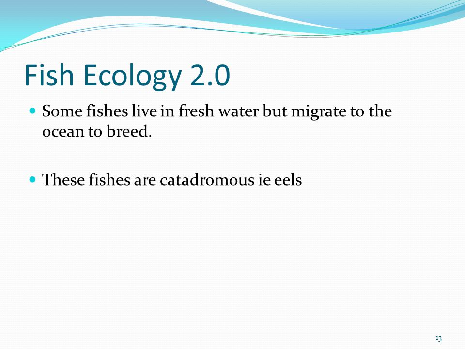 Fish Ecology 2.0 Some fishes live in fresh water but migrate to the ocean to breed.