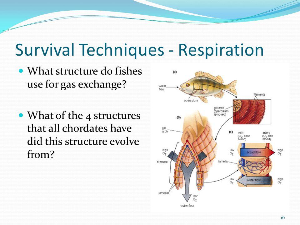 Survival Techniques - Respiration