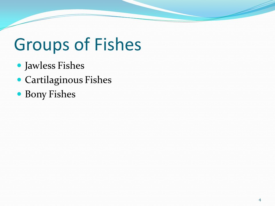 Groups of Fishes Jawless Fishes Cartilaginous Fishes Bony Fishes