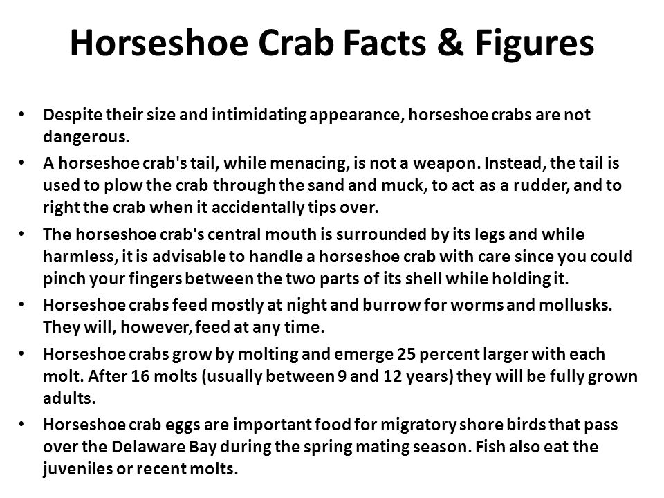 Horseshoe Crab Facts & Figures
