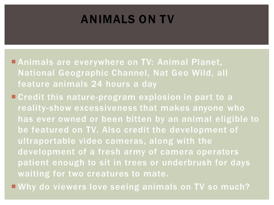Animals on TV Animals are everywhere on TV: Animal Planet, National Geographic Channel, Nat Geo Wild, all feature animals 24 hours a day.
