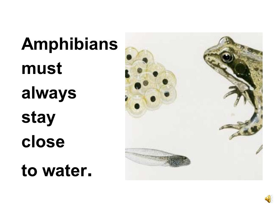 Amphibians must always stay close to water.
