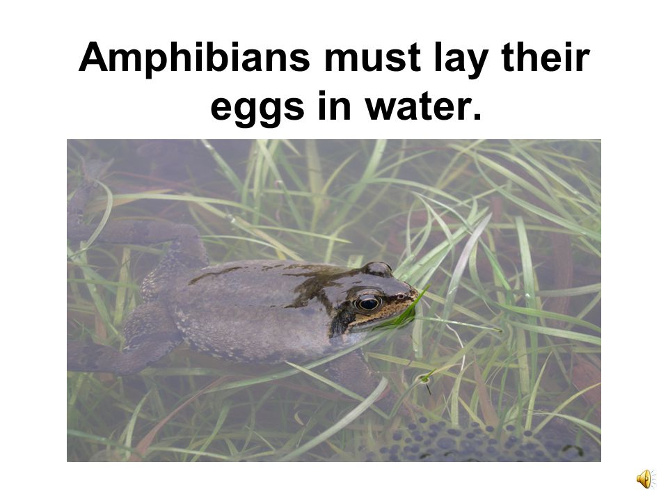 Amphibians must lay their eggs in water.
