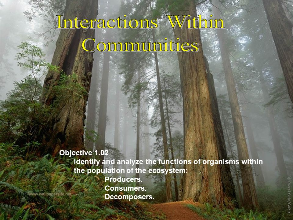 Interactions Within Communities Objective 1.02