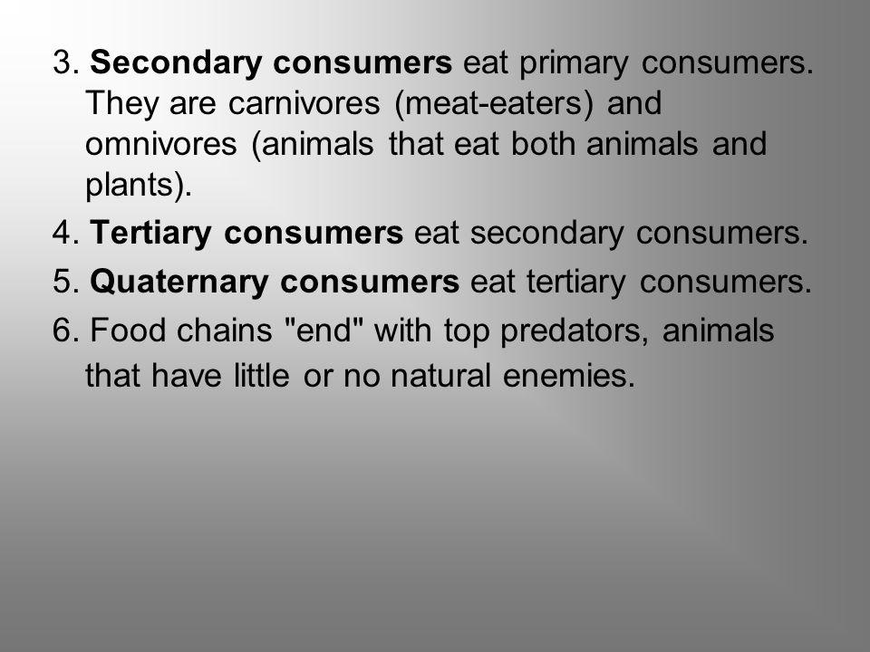 3. Secondary consumers eat primary consumers