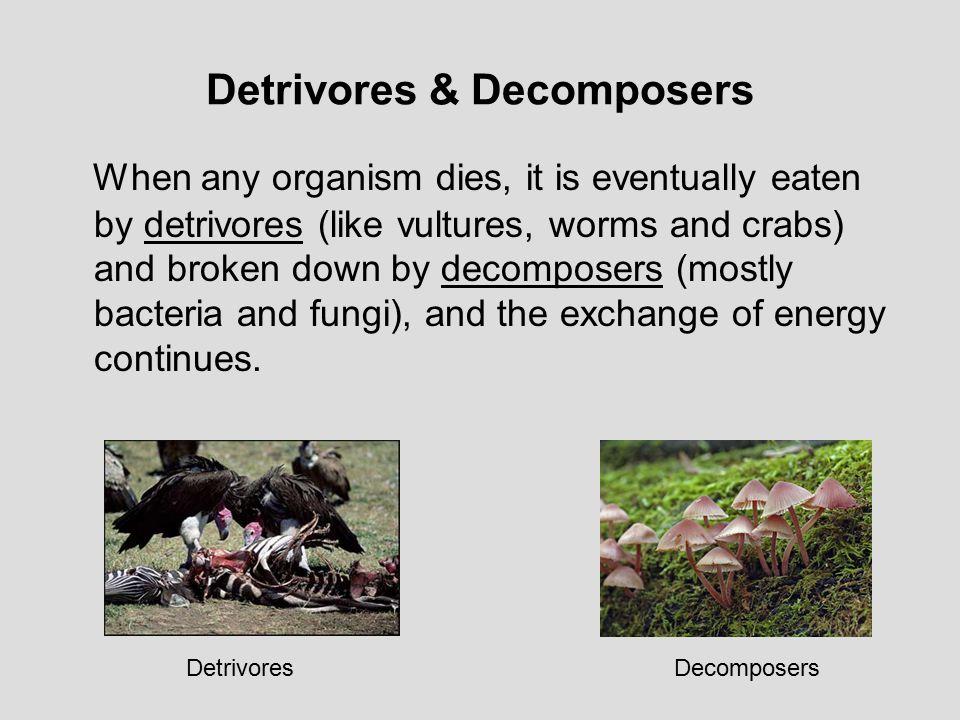 Detrivores & Decomposers