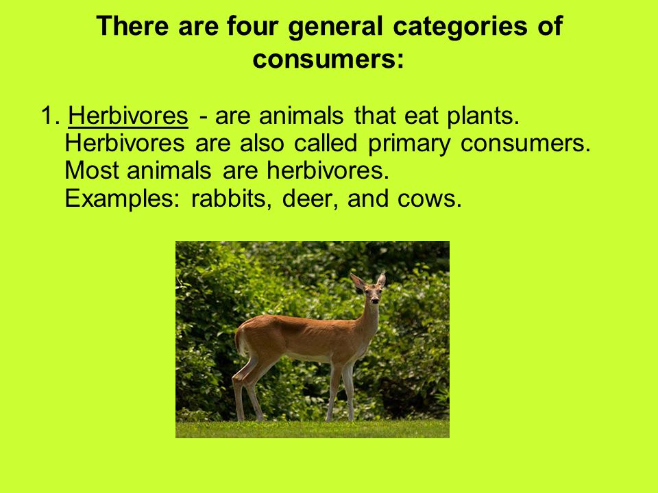 There are four general categories of consumers: