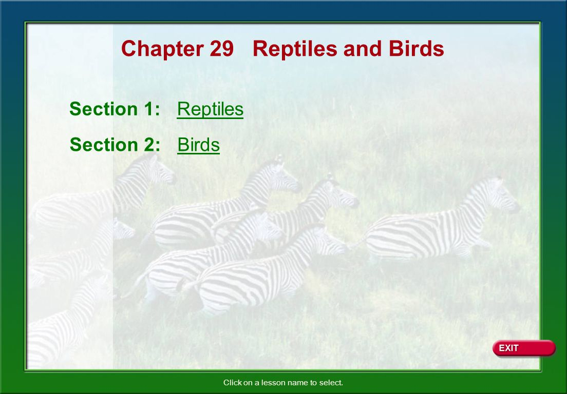 Chapter 29 Reptiles and Birds