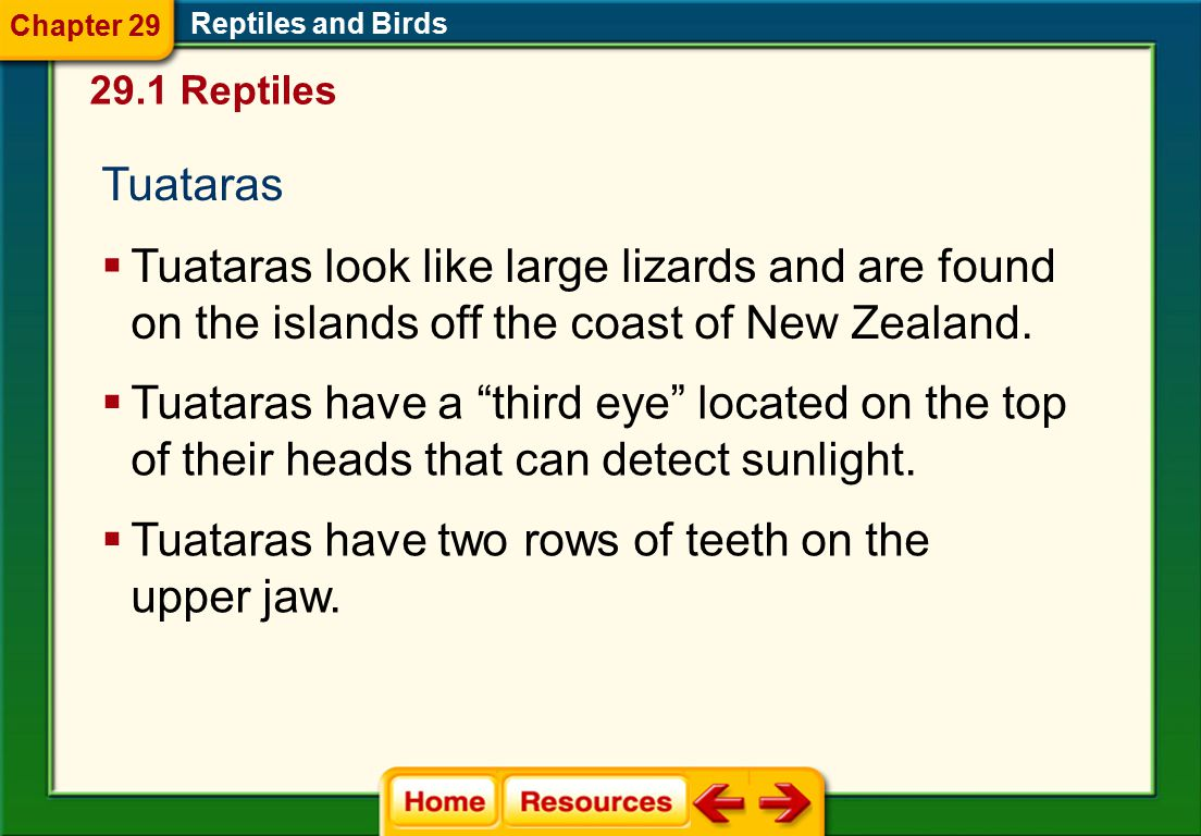 Tuataras have two rows of teeth on the upper jaw.