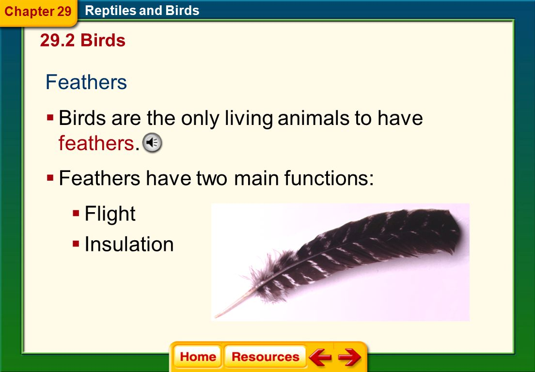 Birds are the only living animals to have feathers.