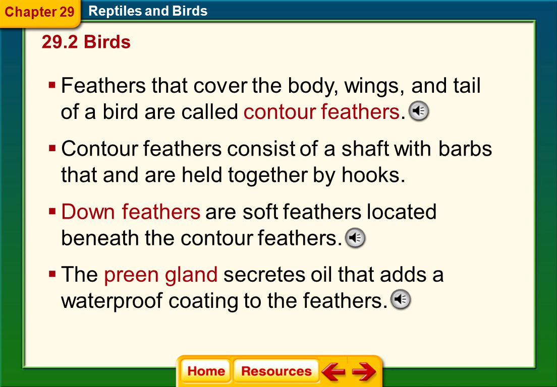 Down feathers are soft feathers located beneath the contour feathers.