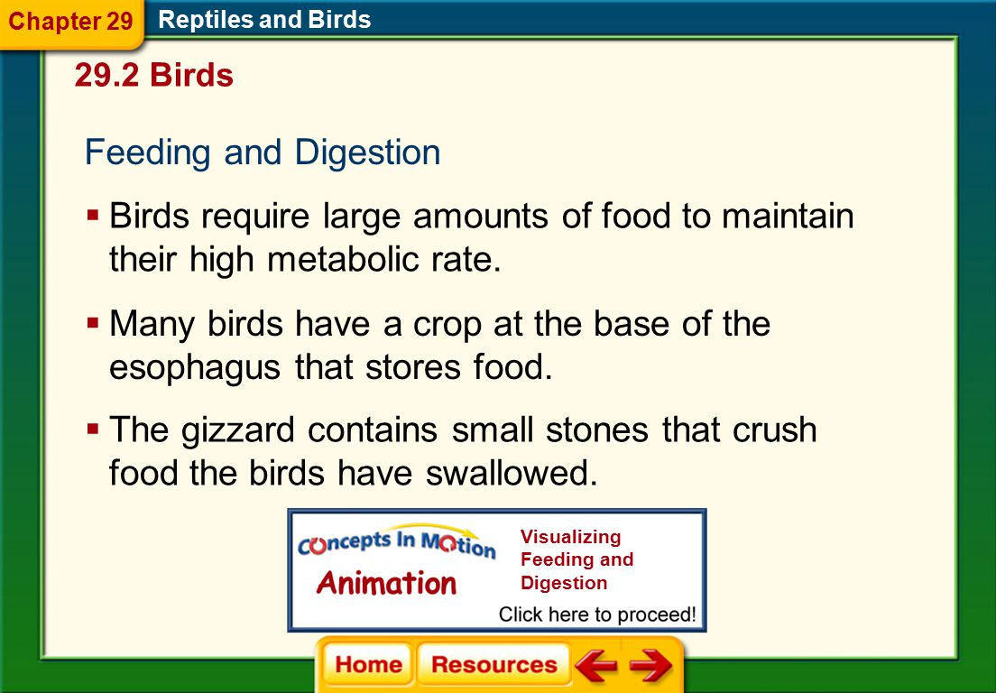 Many birds have a crop at the base of the esophagus that stores food.