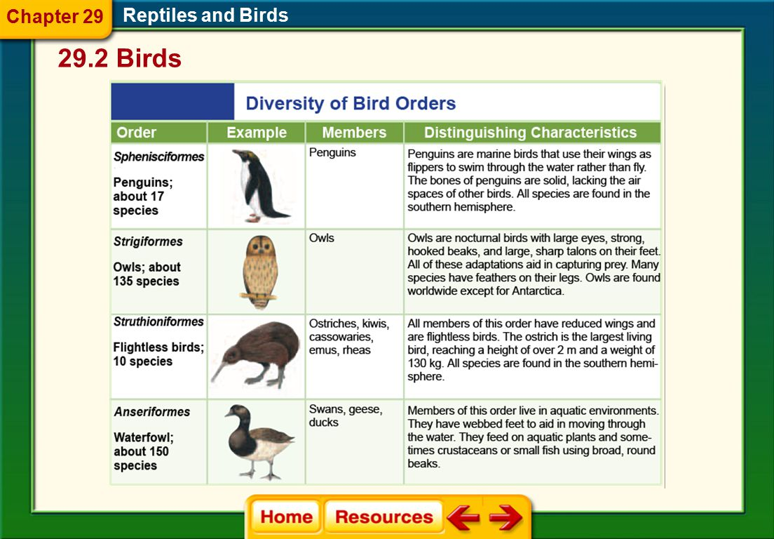 Chapter 29 Reptiles and Birds 29.2 Birds