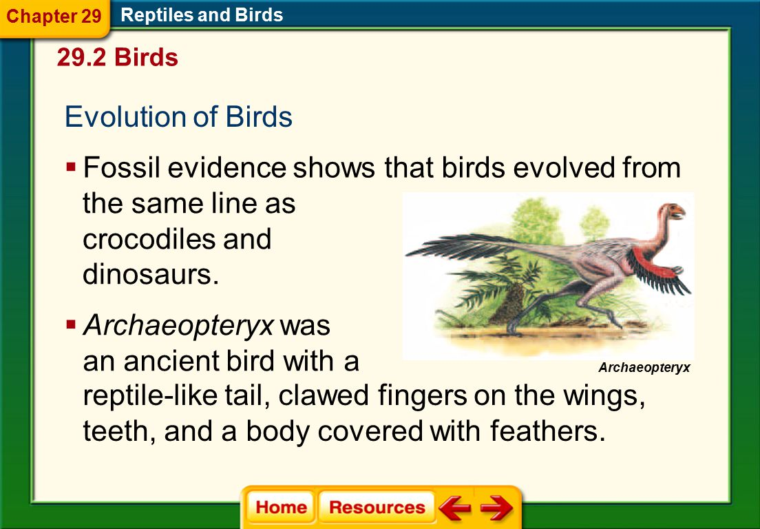 Fossil evidence shows that birds evolved from the same line as