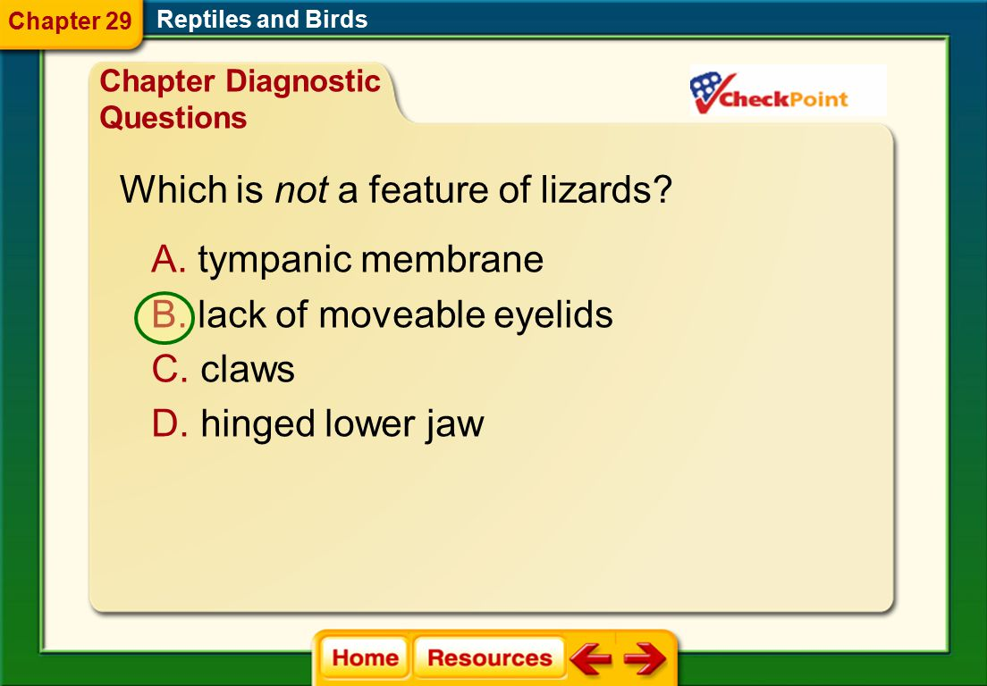 Which is not a feature of lizards