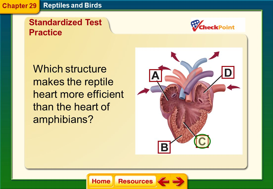 Which structure makes the reptile heart more efficient