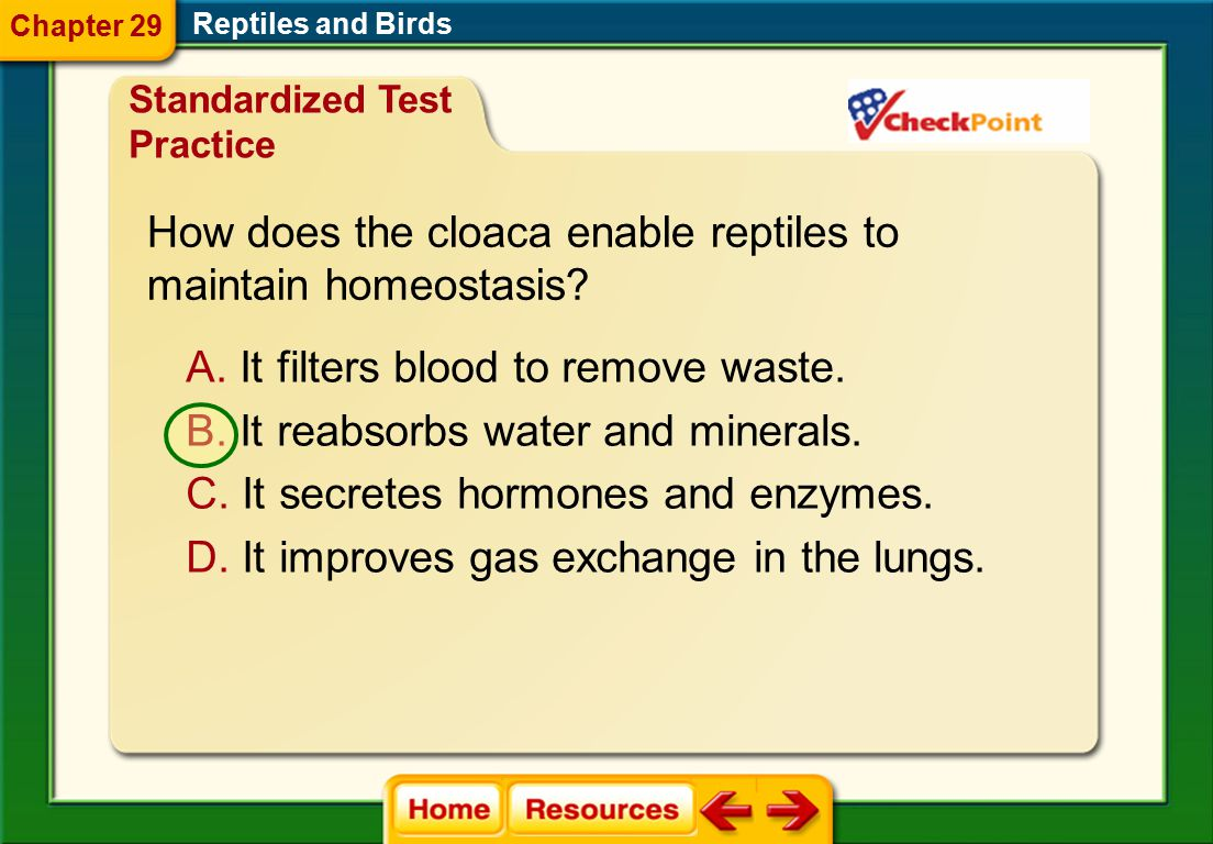 How does the cloaca enable reptiles to maintain homeostasis