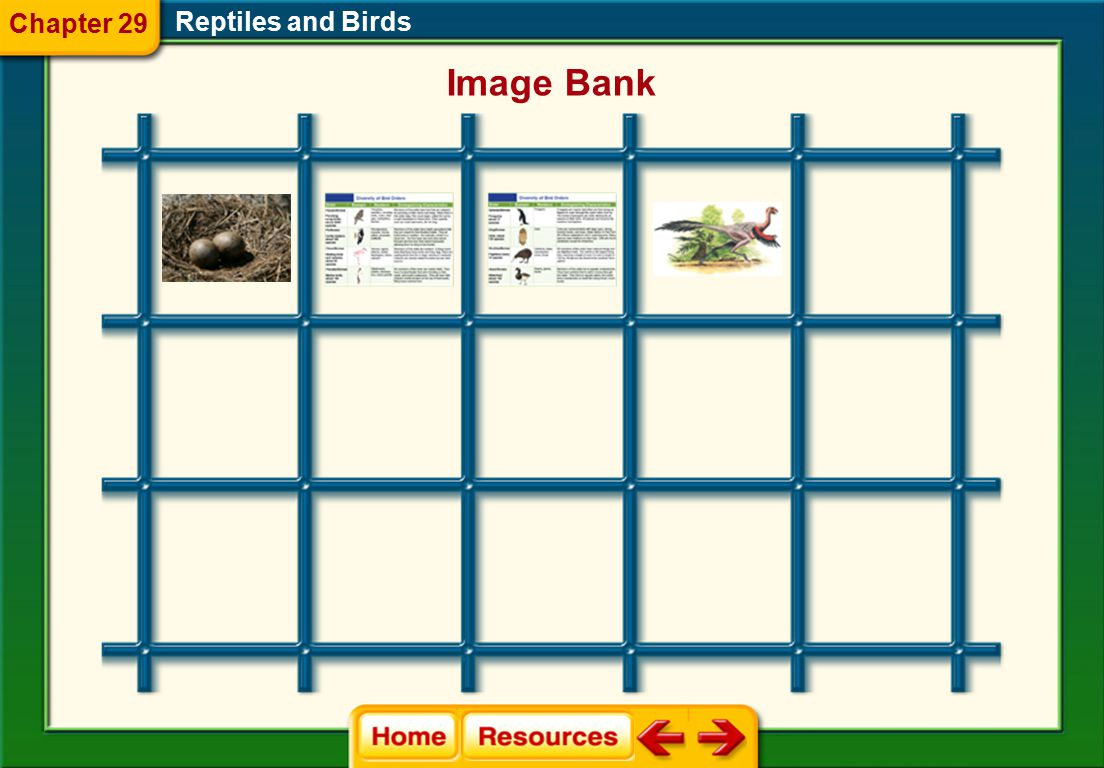 Chapter 29 Reptiles and Birds Image Bank