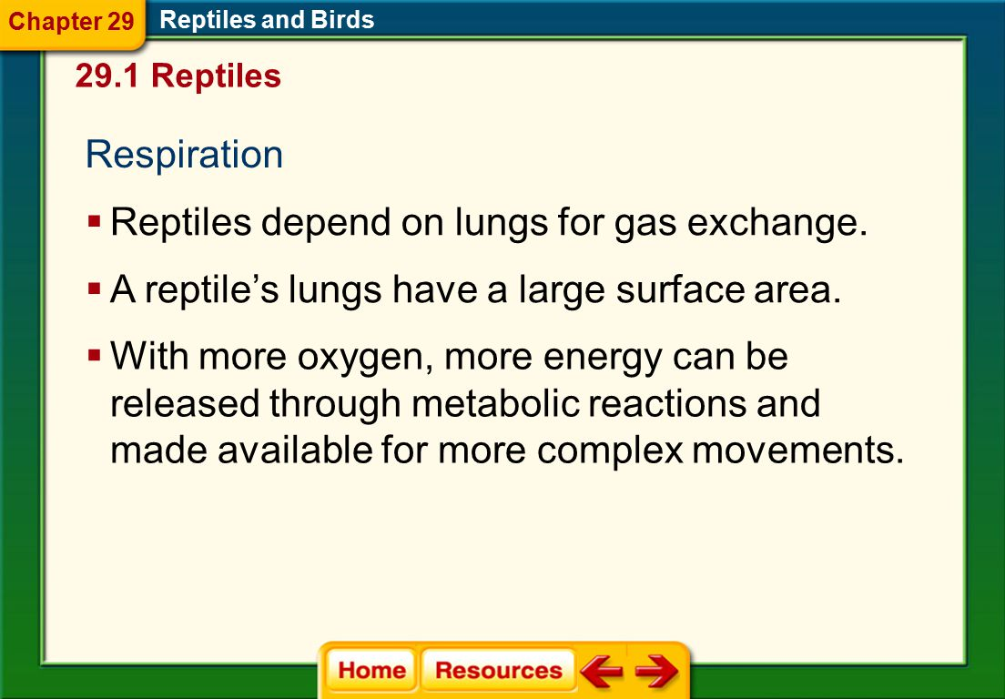 Reptiles depend on lungs for gas exchange.