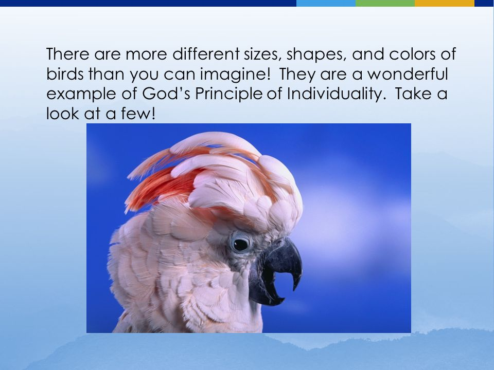 There are more different sizes, shapes, and colors of birds than you can imagine.