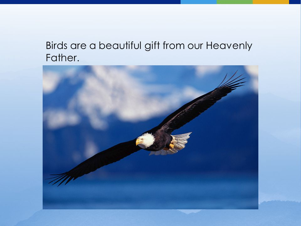 Birds are a beautiful gift from our Heavenly Father.