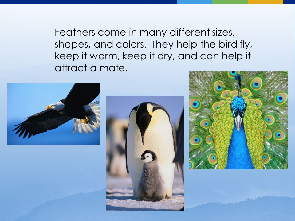 Feathers come in many different sizes, shapes, and colors