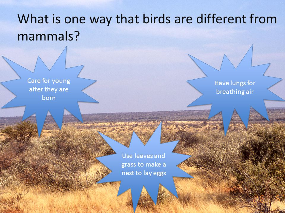 What is one way that birds are different from mammals