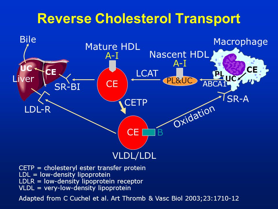 Reverse Cholesterol Transport