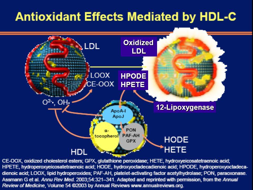 Oxidized LDL HPODE HPETE 12-Lipoxygenase