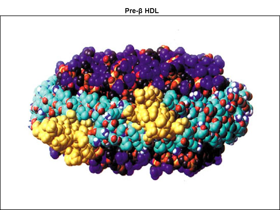 Pre-β HDL