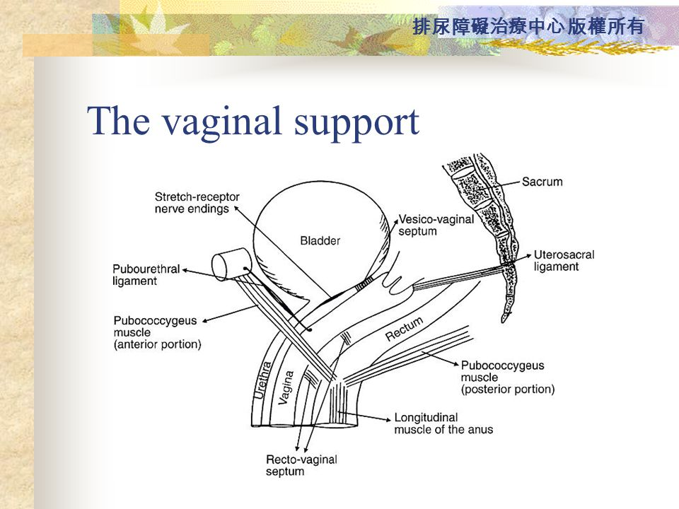 The vaginal support