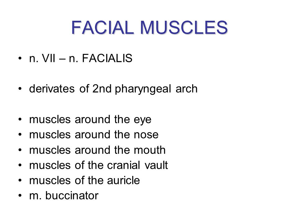 FACIAL MUSCLES n. VII – n. FACIALIS derivates of 2nd pharyngeal arch