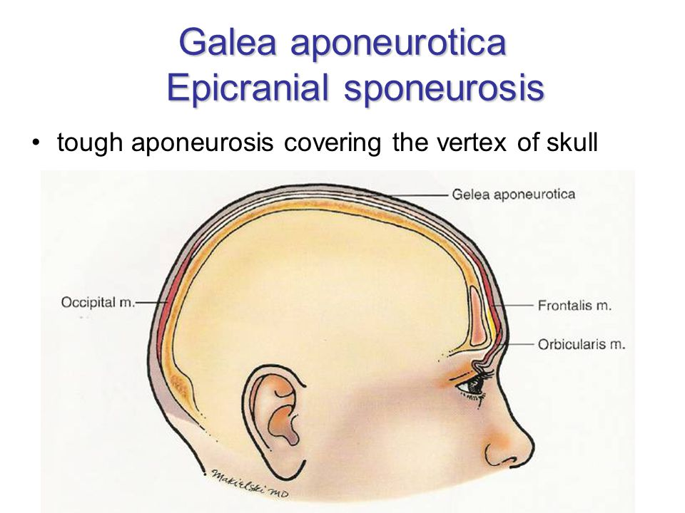 masticatory muscles n  v3  u2013 n  mandibularis derivates of 1st pharyngeal arch m  temporalis m
