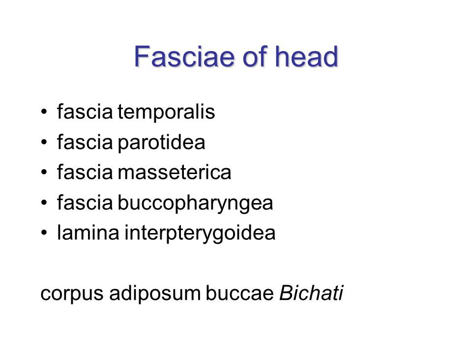 Fasciae of head fascia temporalis fascia parotidea fascia masseterica