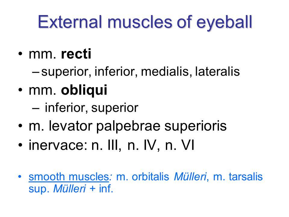 External muscles of eyeball