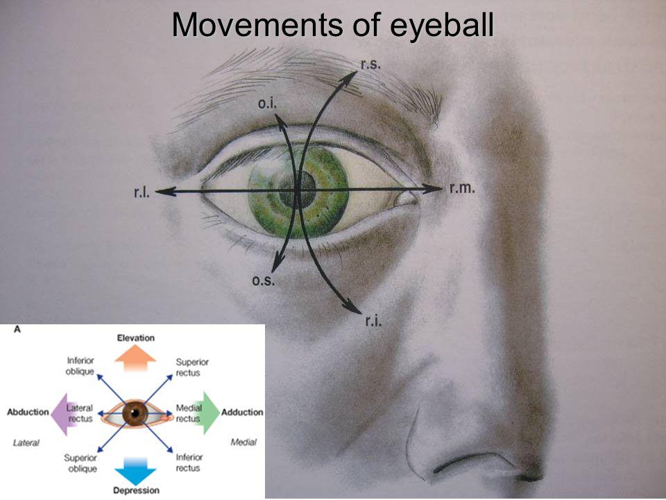 Movements of eyeball