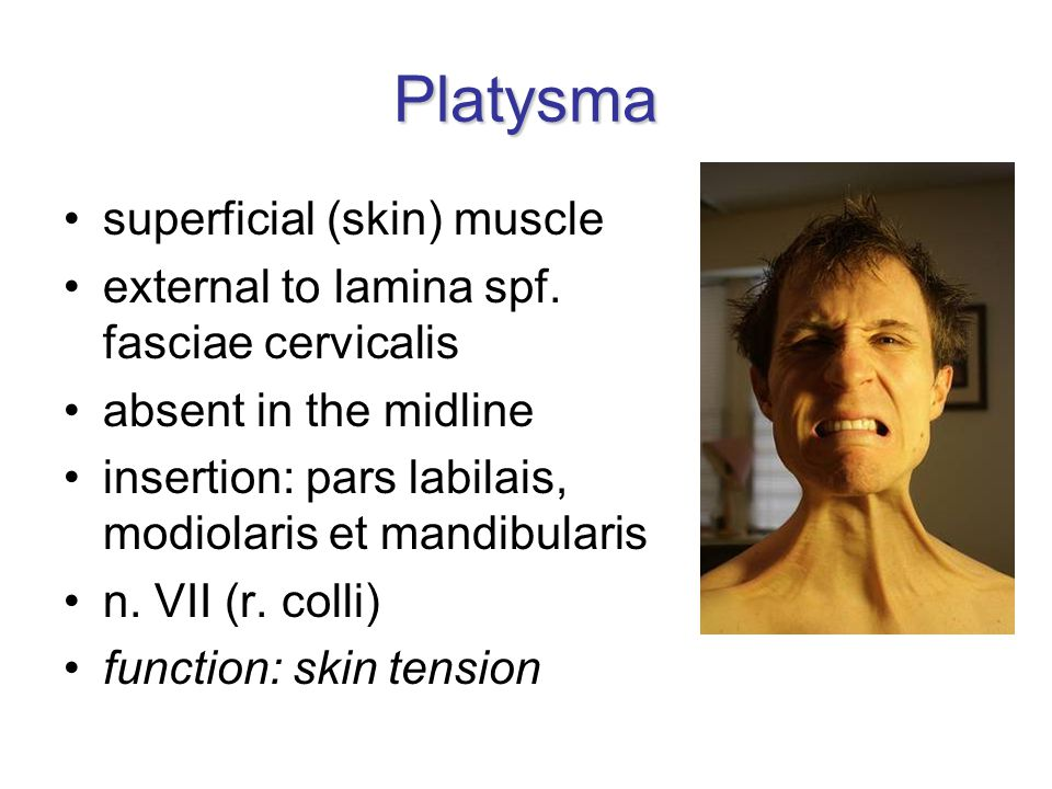 Platysma superficial (skin) muscle