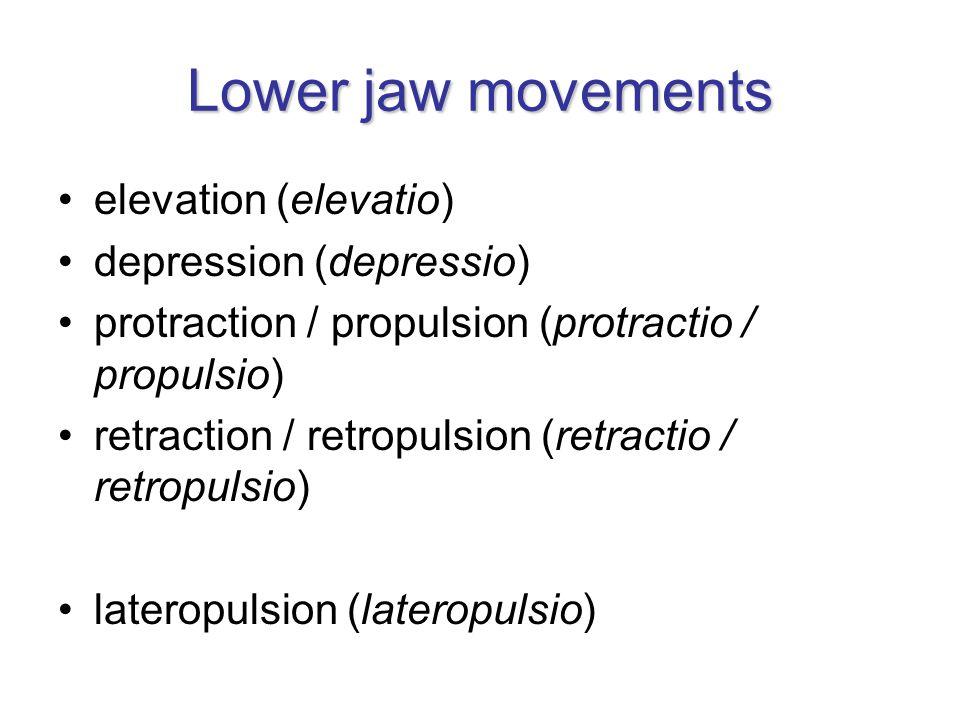 Lower jaw movements elevation (elevatio) depression (depressio)